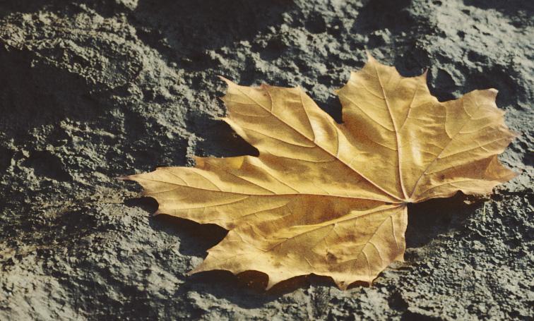 leafrender
